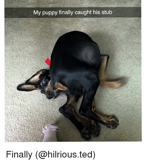 Funny, Ted, and Puppy: My puppy finally caught his stub Finally (@hilrious.ted)