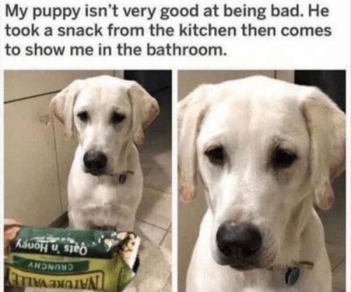 Bad, Good, and Puppy: My puppy isn't very good at being bad. He  took a snack from the kitchen then comes  to show me in the bathroom.  Qats 'n Honey  CRUNCHY  NAIURE VALLE