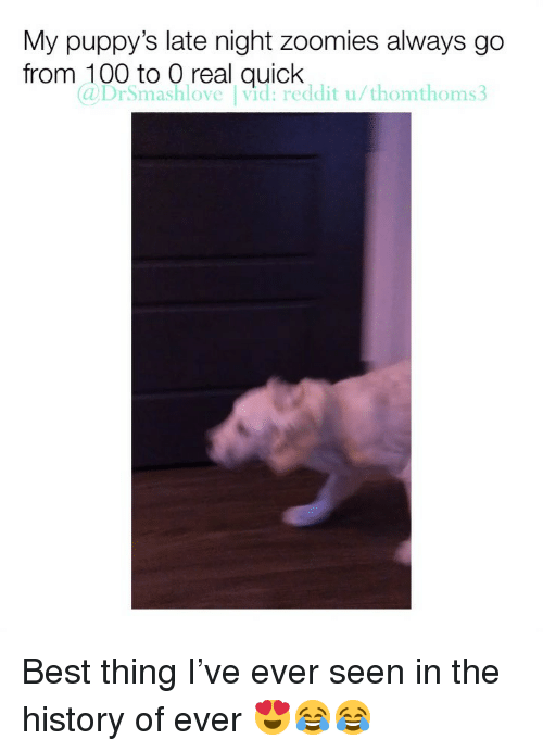 Anaconda, Memes, and Reddit: My puppy's late night zoomies always go  from 100 to O real quick  a DrSmashlove Ivid:reddit u/thomthoms Best thing I've ever seen in the history of ever 😍😂😂