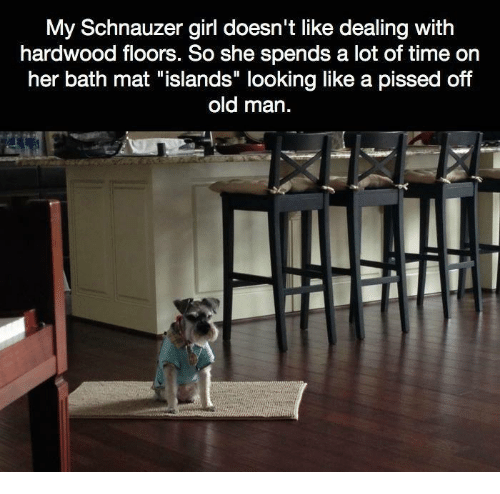 """Schnauzer: My Schnauzer girl doesn't like dealing with  hardwood floors. So she spends a lot of time on  her bath mat """"islands"""" looking like a pissed off  old man."""