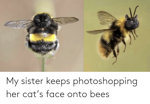 my sister: My sister keeps photoshopping her cat's face onto bees