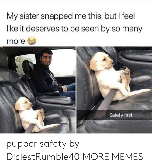 Dank, Memes, and Target: My sister snapped me this, but I feel  like it deserves to be seen by so many  more  Safety first! pupper safety by DiciestRumble40 MORE MEMES
