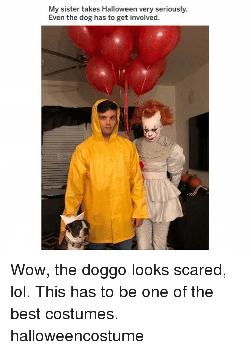 Halloween, Lol, and Memes: My sister takes Halloween very seriously.  Even the dog has to get involved. Wow, the doggo looks scared, lol. This has to be one of the best costumes. halloweencostume