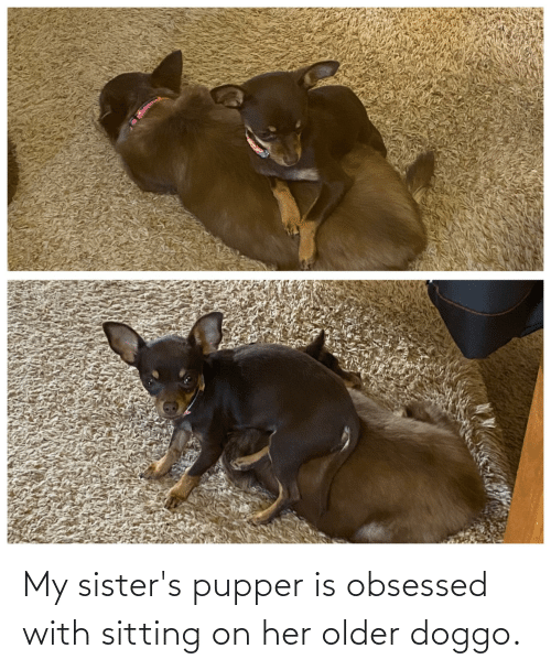 obsessed: My sister's pupper is obsessed with sitting on her older doggo.