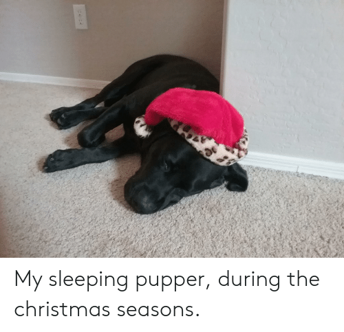 Christmas, Sleeping, and Pupper: My sleeping pupper, during the christmas seasons.