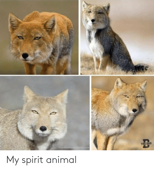 Spirit: My spirit animal