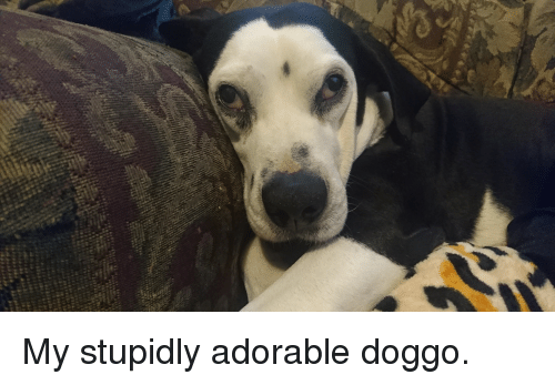 Bad, Divergent, and Adorable: My stupidly adorable doggo.