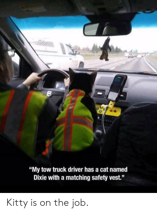 "Cat, Job, and Driver: ""My tow truck driver has a cat named  Dixie with a matching safety vest."" Kitty is on the job."