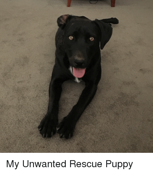 Puppy, Unwanted, and Rescue: My Unwanted Rescue Puppy