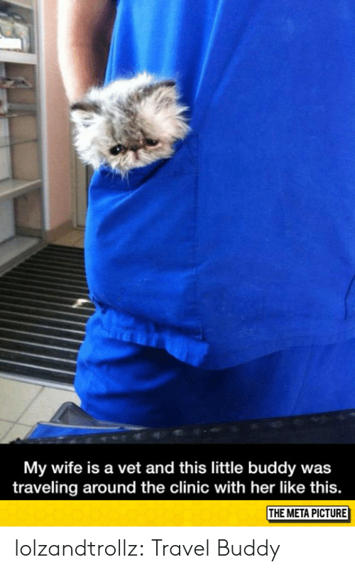 traveling: My wife is a vet and this little buddy was  traveling around the clinic with her like this.  THE META PICTURE lolzandtrollz:  Travel Buddy