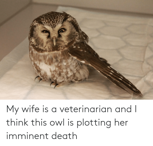 my wife: My wife is a veterinarian and I think this owl is plotting her imminent death