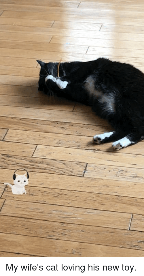 Cat, New, and Toy: My wife's cat loving his new toy.