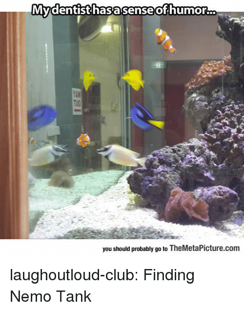 Club, Finding Nemo, and Tumblr: Mydentisthasasenseofhumorc.  you should probably go to TheMetaPicture.com laughoutloud-club:  Finding Nemo Tank