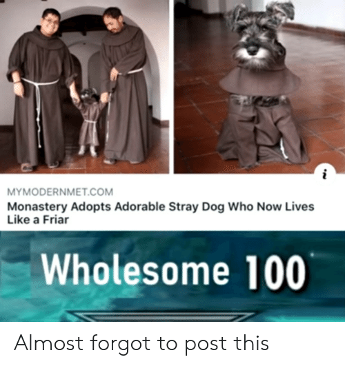 Wholesome, Adorable, and Dog: MYMODERNMET.COM  Monastery Adopts Adorable Stray Dog Who Now Lives  Like a Friar  Wholesome 100 Almost forgot to post this