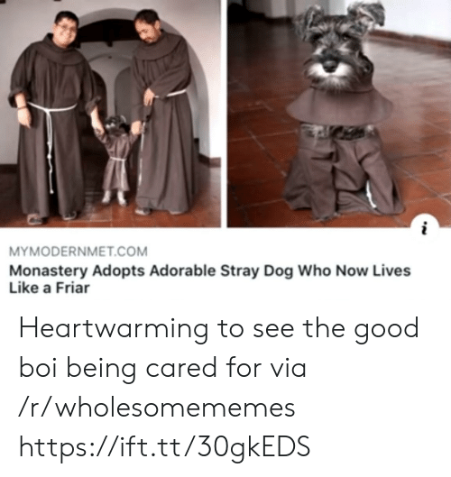 Good, Adorable, and Boi: MYMODERNMET.COM  Monastery Adopts Adorable Stray Dog Who Now Lives  Like a Friar Heartwarming to see the good boi being cared for via /r/wholesomememes https://ift.tt/30gkEDS