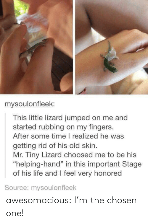 "Life, Tumblr, and Blog: mysoulonfleek:  This little lizard jumped on me and  started rubbing on my fingers.  After some time I realized he was  getting rid of his old skin  Mr. Tiny Lizard choosed me to be his  ""helping-hand"" in this important Stage  of his life and I feel very honored  Source: mysoulonfleek awesomacious:  I'm the chosen one!"
