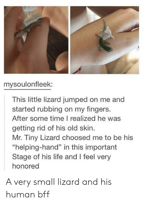 "Life, Time, and Old: mysoulonfleek:  This little lizard jumped on me and  started rubbing on my fingers.  After some time I realized he was  getting rid of his old skin.  Mr. Tiny Lizard choosed me to be his  ""helping-hand"" in this important  Stage of his life and I feel very  honored A very small lizard and his human bff"