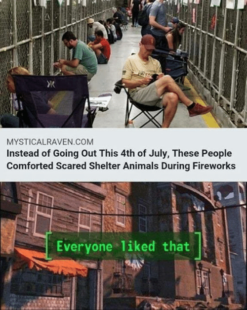 Animals, Memes, and 4th of July: MYSTICALRAVEN.COM  Instead of Going Out This 4th of July, These People  Comforted Scared Shelter Animals During Fireworks  Everyone liked that