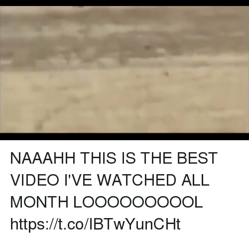 Best Video: NAAAHH THIS IS THE BEST VIDEO I'VE WATCHED ALL MONTH LOOOOOOOOOL  https://t.co/IBTwYunCHt