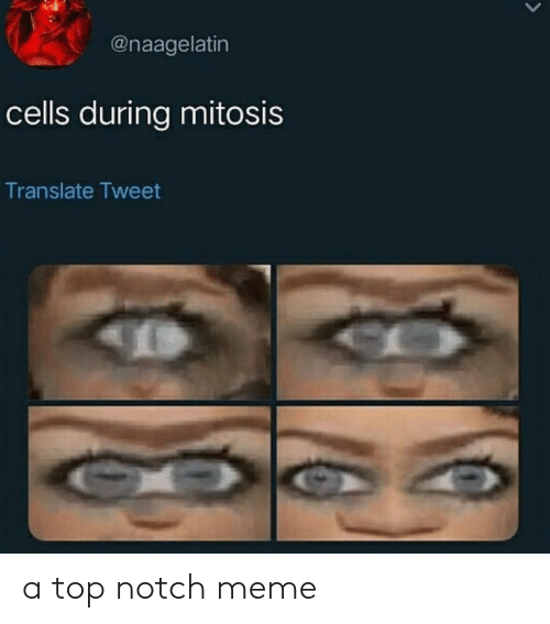 Meme, Translate, and Top: @naagelatin  cells during mitosis  Translate Tweet a top notch meme