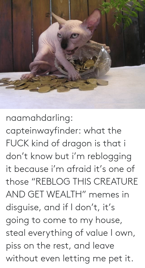 """Leave Without: naamahdarling:  capteinwayfinder:  what the FUCK kind of dragon is that  i don't know but i'm reblogging it because i'm afraid it's one of those """"REBLOG THIS CREATURE AND GET WEALTH"""" memes in disguise, and if I don't, it's going to come to my house, steal everything of value I own, piss on the rest, and leave without even letting me pet it."""