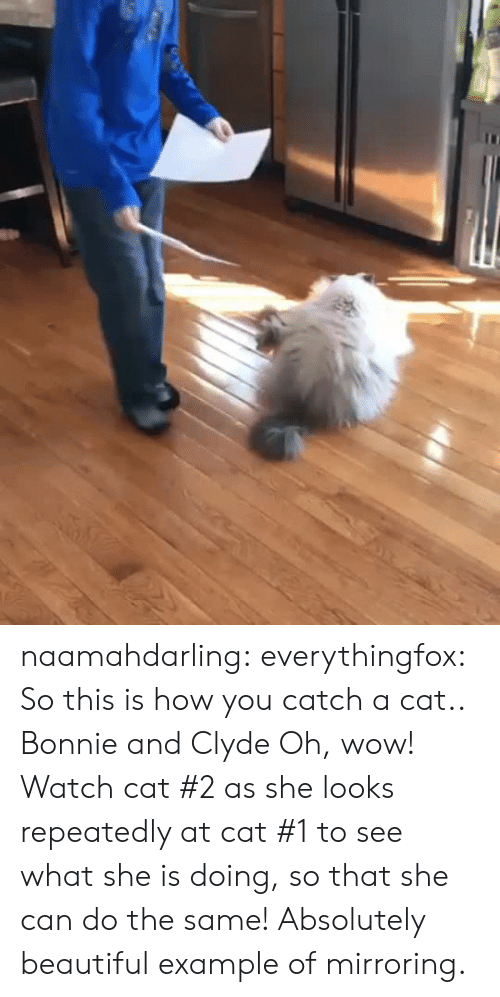 example: naamahdarling:  everythingfox:   So this is how you catch a cat..   Bonnie and Clyde   Oh, wow! Watch cat #2 as she looks repeatedly at cat #1 to see what she is doing, so that she can do the same! Absolutely beautiful example of mirroring.