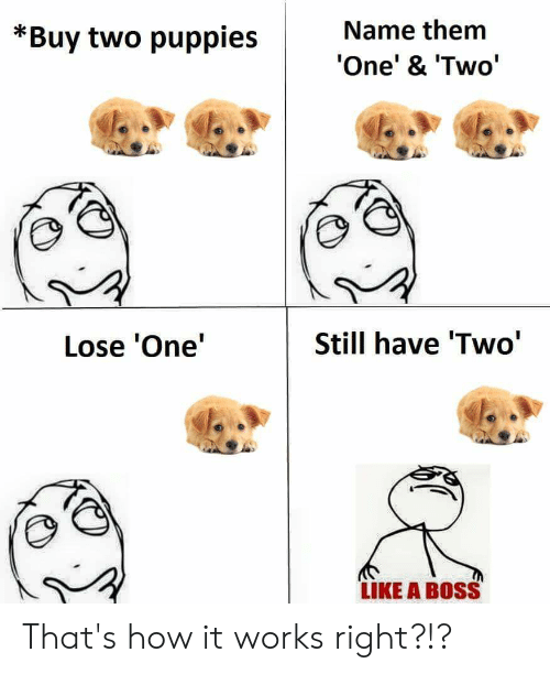 Puppies, How, and Boss: Name them  *Buy two puppies  One' & 'Two'  Still have 'Two'  Lose 'One'  LIKE A BOSS That's how it works right?!?