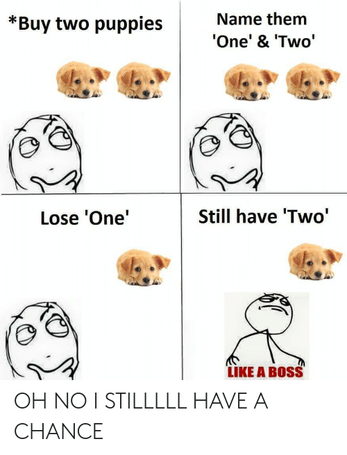 Puppies, Boss, and One: Name them  *Buy two puppies  One' & 'Two'  Still have 'Two'  Lose 'One'  LIKE A BOSS OH NO I STILLLLL HAVE A CHANCE