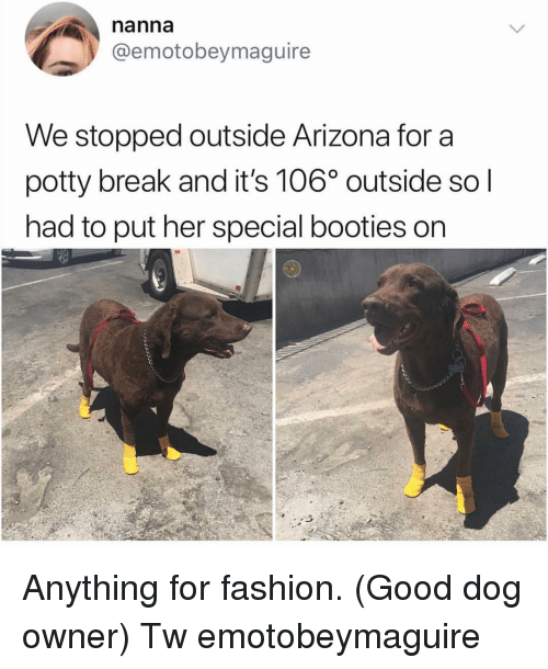 booties: nanna  @emotobeymaguire  We stopped outside Arizona for a  potty break and it's 106° outside so l  had to put her special booties on Anything for fashion. (Good dog owner) Tw emotobeymaguire