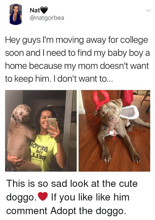 College, Cute, and Memes: Nat  @natgorbea  Hey guys I'm moving away for college  soon and Ineed to find my baby boy a  home because my mom doesn't want  to keep him. I don't want to... This is so sad look at the cute doggo.❤️ If you like like him comment Adopt the doggo.
