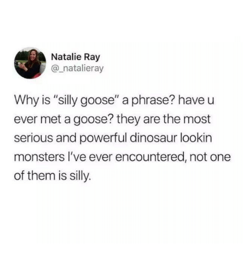 "Dinosaur, Live, and Humans of Tumblr: Natalie Ray  @_natalieray  Why is ""silly goose"" a phrase? have u  ever met a goose? they are the most  serious and powerful dinosaur lookin  monsters lI've ever encountered, not one  of them is silly."