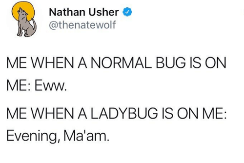 Usher, Bug, and Evening: Nathan Usher  athenatewolf  ME WHEN A NORMAL BUG IS ON  ME: Eww.  ME WHEN A LADYBUG IS ON ME:  Evening, Ma'am.