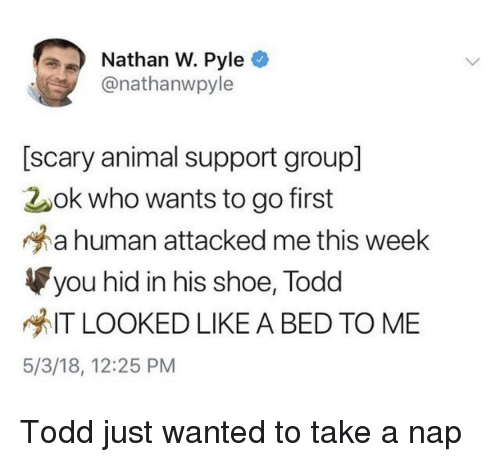 Animal, Human, and Wanted: Nathan W. Pyle  @nathanwpyle  [scary animal support group]  2ok who wants to go first  a human attacked me this week  you hid in his shoe, Todd  IT LOOKED LIKE A BED TO ME  5/3/18, 12:25 PM Todd just wanted to take a nap