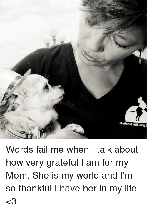 Fail, Memes, and 🤖: National Mal Dog Words fail me when I talk about how very grateful I am for my Mom.  She is my world and I'm so thankful I have her in my life. <3