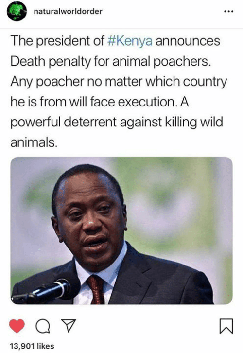Animals, Funny, and Tumblr: naturalworldorder  The president of #Kenya announces  Death penalty for animal poachers  Any poacher no matter which country  he is from will face execution. A  powerful deterrent against killing wild  animals.  13,901 likes