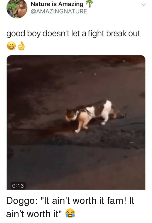 "Fam, Break, and Good: Nature is Amazing T  @AMAZINGNATURE  good boy doesn't let a fight break out  0:13 Doggo: ""It ain't worth it fam! It ain't worth it"" 😂"
