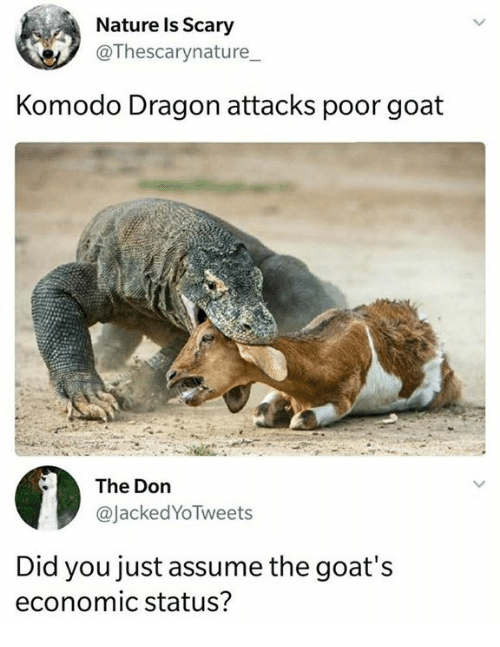 Memes, Goat, and Nature: Nature Is Scary  @Thescarynature  Komodo Dragon attacks poor goat  The Don  @JackedYoTweets  Did you just assume the goat's  economic status?