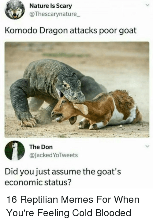 cold blooded: Nature Is Scary  @Thescarynature  Komodo Dragon attacks poor goat  The Don  @JackedYoTweets  Did you just assume the goat's  economic status? 16 Reptilian Memes For When You're Feeling Cold Blooded