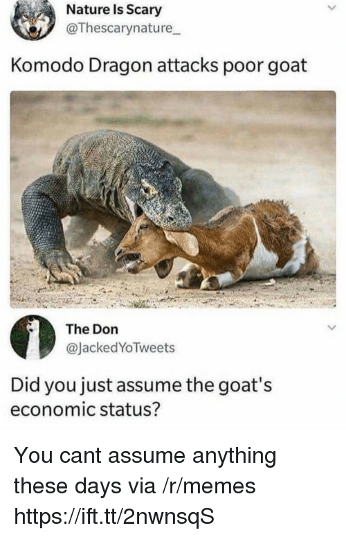 Memes, Goat, and Nature: Nature Is Scary  @Thescarynature  Komodo Dragon attacks poor goat  The Don  @JackedYoTweets  Did you just assume the goat's  economic status? You cant assume anything these days via /r/memes https://ift.tt/2nwnsqS