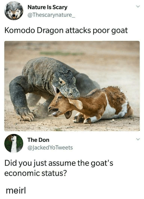 economic: Nature ls Scary  @Thescarynature_  Komodo Dragon attacks poor goat  The Don  @JackedYoTweets  Did you just assume the goat's  economic status? meirl