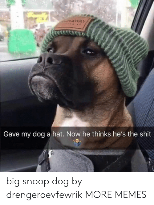 Dank, Memes, and Shit: NAWAY  Gave my dog a hat. Now he thinks he's the shit big snoop dog by drengeroevfewrik MORE MEMES