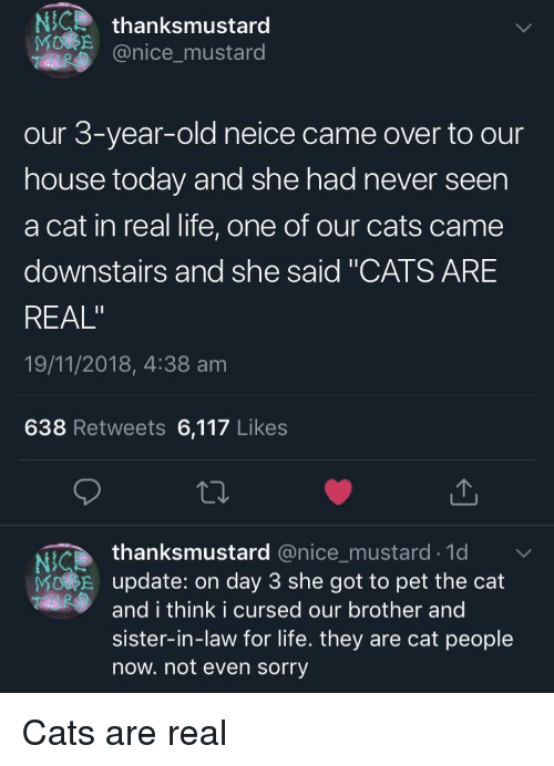 "Cats, Life, and Sorry: NCthanksmustard  @nice_mustard  our 3-year-old neice came over to our  house today and she had never seen  a cat in real life, one of our cats came  downstairs and she said ""CATS ARE  REAL""  19/11/2018, 4:38 am  638 Retweets 6,117 Likes  thanksmustard @nice_mustard.1d  Ni  MORE update: on day 3 she got to pet the cat  and i think i cursed our brother and  sister-in-law for life. they are cat people  now. not even sorry Cats are real"