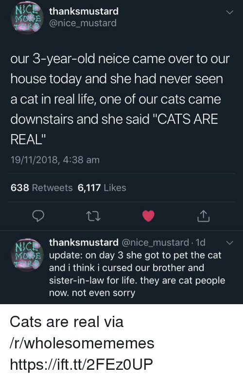 "Cats, Life, and Sorry: NCthanksmustard  @nice_mustard  our 3-year-old neice came over to our  house today and she had never seen  a cat in real life, one of our cats came  downstairs and she said ""CATS ARE  REAL""  19/11/2018, 4:38 am  638 Retweets 6,117 Likes  thanksmustard @nice_mustard.1d  Ni  MORE update: on day 3 she got to pet the cat  and i think i cursed our brother and  sister-in-law for life. they are cat people  now. not even sorry Cats are real via /r/wholesomememes https://ift.tt/2FEz0UP"