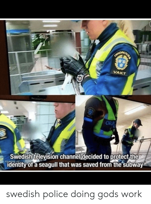 Police, Subway, and Work: NDA  CANONINE  VAKT  OR  Swedish television channel decided to protect the  identity of a seagull that was saved from the subway swedish police doing gods work
