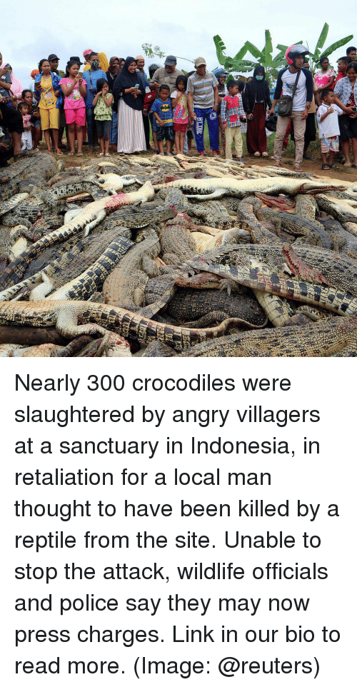 Memes, Police, and Image: Nearly 300 crocodiles were slaughtered by angry villagers at a sanctuary in Indonesia, in retaliation for a local man thought to have been killed by a reptile from the site. Unable to stop the attack, wildlife officials and police say they may now press charges. Link in our bio to read more. (Image: @reuters)