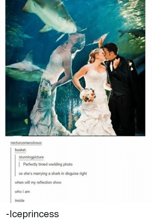 Memes, Shark, and Wedding: necturusmaculosus  busket  stunningpicture  | Perfectly timed wedding photo  so she's marrying a shark in disguise right  when will my reflection show  who i am  inside -Iceprincess