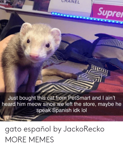 heard: NEL  Suprer  Just bought this cat from PetSmart and I ain't  heard him meow since we left the store, maybe he  speak Spanish idk lol gato español by JackoRecko MORE MEMES