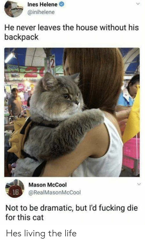 Fucking, Life, and House: nes Helene  @inihelene  He never leaves the house without his  backpack  Mason McCool  @RealMasonMcCool  16  Not to be dramatic, but l'd fucking die  for this cat Hes living the life