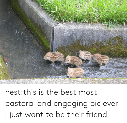 Target, Tumblr, and Best: nest:this is the best most pastoral and engaging pic ever i just want to be their friend