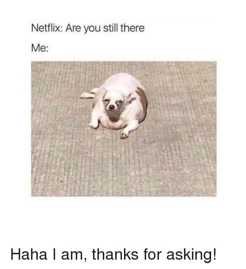 Dank, Netflix, and Asking: Netflix: Are you still there  Me: Haha I am, thanks for asking!